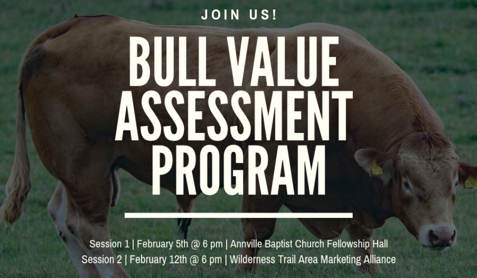 Ever wonder how to determine the best bull for your operation?